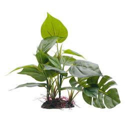 Small Image of Fluval Anubias Plant 20cm