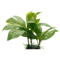 Small Image of Fluval Yellow Striped Spathiphyllum Plant 22cm
