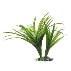 Small Image of Fluval Striped Acorus Plant 25cm