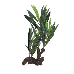 Small Image of Fluval Willow Leaf Hygrophila Plant On Root 30cm