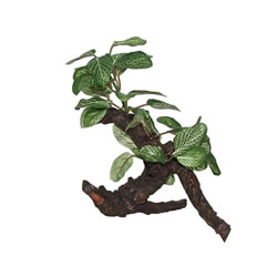 Small Image of Fluval African Shade Leaf Plant On Root 20cm