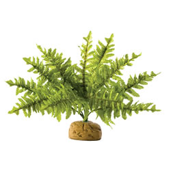Small Image of Exo Terra Boston Fern Small