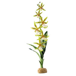 Small Image of Exo Terra Spider Orchid