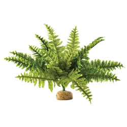 Small Image of Exo Terra Boston Fern Medium