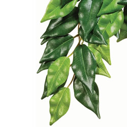 Small Image of Exo Terra Silk Ficus Plant Small