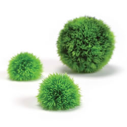Small Image of BiOrb Aquatic Topiary
