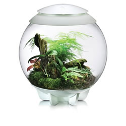 Small Image of BiOrb Air Terrarium - White