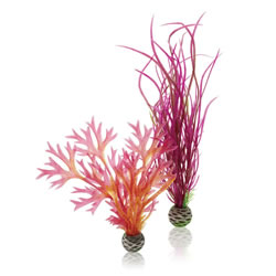 Small Image of BiOrb Colour Plants Red/Pink