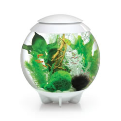 Small Image of BiOrb HALO 60 Moonlight LED Aquarium - White