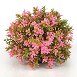 Small Image of BiOrb Topiary Ball - Pink