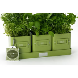 Small Image of 3x Windowsill Herb Pots on a Tray by Burgon & Ball - Green