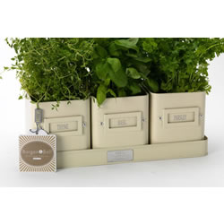 Small Image of 3 Pretty Windowsill Herb Pots on a Tray by Burgon & Ball, Cream