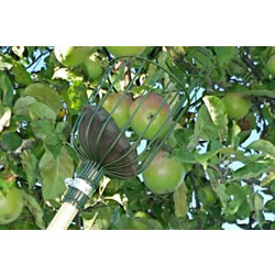 Small Image of Burgon & Ball Apple, Pear, Plum, Fruit Picker & Pole: No Ladder Required!