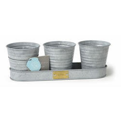 Small Image of Sophie Conran Herb Pots on a Tray windowsill herbs Zinc