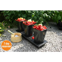 Small Image of Chilligrow Chilli Planter