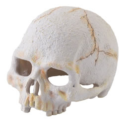 Small Image of Exo Terra Primate Skull - Small