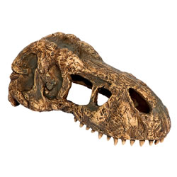 Small Image of Exo Terra T-Rex Skull - Small