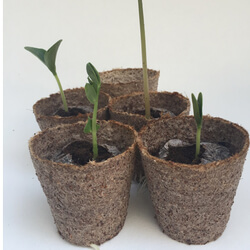 Small Image of 10 Jiffy 6cm Peat-Free Fibre Plant Pots: Easy transplanting, no waste