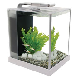 Small Image of Fluval Spec 10L White