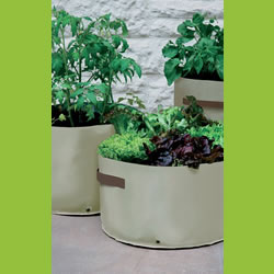 Small Image of 3 Haxnicks Vegetable Patio Planters