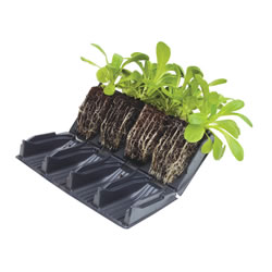 Small Image of 8 Books (32 Cells) Deep 12cm Rootrainers Root Trainers: For stronger plants