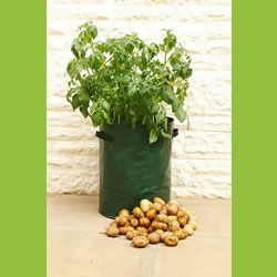 Small Image of 3 Haxnicks Potato Patio Planter Bags: Tough & sturdy with drainage holes
