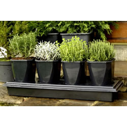 Small Image of Herbgrow Herb Growing Planter