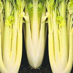 Small Image of Nutley's Thomas Etty Heritage Vegetable Seeds Celery Golden Self-Blanching