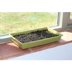 Small Image of Haxnicks Strong Bamboo Seed Tray Compostable Biodegradable (Pack of 3)