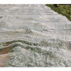 Small Image of Insect Netting 5m x 2m protect against root fly cabbage white cutworm & more