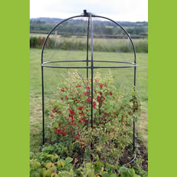 Small Image of Haxnicks Steel Round Garden Fruit Cage