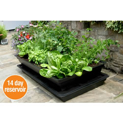 Small Image of Salad & Veg Planter with seed Starter Lid - Medium