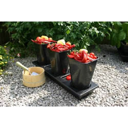 Small Image of Chilligrow Chilli Planter x2