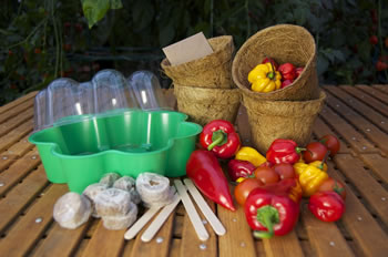 Extra image of Deluxe Chilli Growing Kit - With Propagator & Seeds