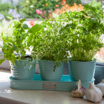 Extra image of Sophie Conran Herb Pots on a Tray - Blue