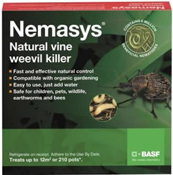 Image of Nemasys Vine Weevil Killer 12sq metres