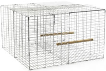 Image of Larsen Traps, Humane wire cage trap