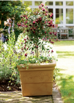 Image of Grapes Sandstone Effect Square Garden Planter - 31cm
