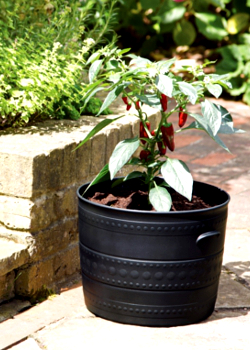 Image of Smithy Patio Tub - 50cm