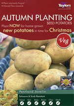Autumn Planting Seed Potatoes - Pentland Javelin