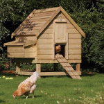 Large Softwood Chicken Coop