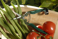 Image of Burgon & Ball Fruit & Veg Snip Cutters