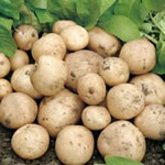 Seed Potatoes - First Earlies Swift 2.25kg