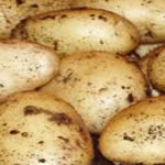 Seed Potatoes - Second Early Wilja 2.25kg