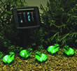 Solar Powered Light Set - Freddy Frog