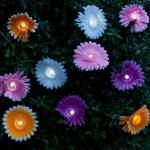 Daisy Solar String Lights - Warm White