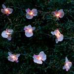 Orchid Solar String Lights - Warm White