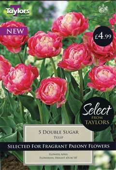 Image of Double Sugar Tulips Select Range by Taylors