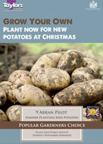 Autumn Planting Seed Potatoes - Arran Pilot