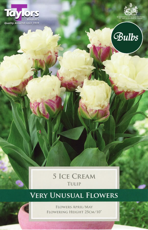 ice cream tulip bulbs garden4less uk shop. Black Bedroom Furniture Sets. Home Design Ideas